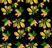 Beautiful wonderful graphic bright floral herbal autumn green chestnut leaves and chestnuts pattern on black background vector. Perfect for textile, wallpapers royalty free illustration