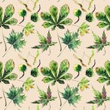 Beautiful wonderful graphic bright floral herbal autumn green maple chestnut leaves and chestnuts pattern on beige pastel backgro. Und watercolor hand vector illustration
