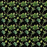Beautiful wonderful graphic bright floral herbal autumn green maple chestnut leaves and chestnuts pattern on black background wat. Ercolor hand sketch. Perfect royalty free illustration