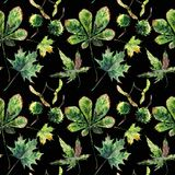 Beautiful wonderful graphic bright floral herbal autumn green maple chestnut leaves and chestnuts pattern on black background wat. Ercolor hand sketch. Perfect stock illustration