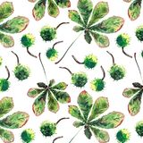 Beautiful wonderful graphic bright floral herbal autumn green maple chestnut leaves and chestnuts pattern watercolor hand sketch. Perfect for textile royalty free illustration