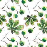 Beautiful wonderful graphic bright floral herbal autumn green maple chestnut leaves and chestnuts pattern watercolor hand sketch. Perfect for textile vector illustration