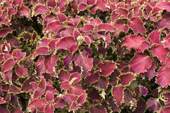 Beautiful wonderful nature red pink flower. Leaf stock image
