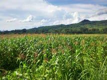 Beautiful Of Wonogiri Indonesia. Farming green Stock Image
