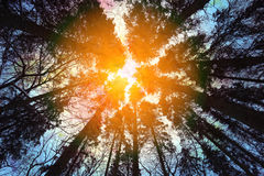 Beautiful wood and bright Royalty Free Stock Images