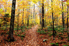 Beautiful Wooded Path in Autumn. A beautiful trail in Autumn at peak foliage Royalty Free Stock Photography