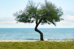 Beautiful wooded and peaceful environment, beautiful beaches and the sea. Royalty Free Stock Photo