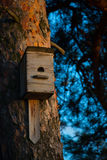 Beautiful wooden birdhouse on tree in forest Royalty Free Stock Photo