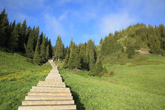 Beautiful wooden boardwalk staircase hiking trail Royalty Free Stock Images