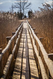 A beautiful wooden footpath through reeds on a lake Royalty Free Stock Photos