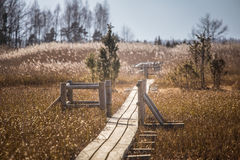 A beautiful wooden footpath through reeds on a lake Stock Image