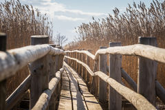 A beautiful wooden footpath through reeds on a lake Stock Photo