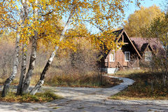 Beautiful wooden house with birch trees in autumn Stock Images