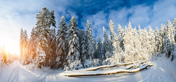 Beautiful wooden house in a winter sunny day. Beautiful tree in the snow on a sunny winter day Stock Photo