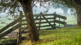 Beautiful wooden meadow fence under pollard willows. Foggy distant trees and green grass in early morning sun creating a nice atmosphere Royalty Free Stock Photos