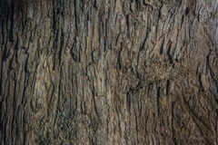 Beautiful wooden texture , background,  Skin of Pine Bark,  Thailand. Royalty Free Stock Photography