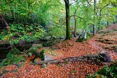 Beautiful Woodland Stock Photo