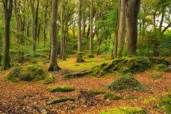 Beautiful Woodland Stock Photography
