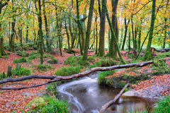 Beautiful Woodland Stream Royalty Free Stock Photography