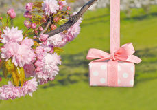 Beautiful wrapped gift box with spring sakura blossoms Stock Images