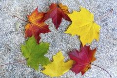 Beautiful wreath of  colorful autumn leaves Stock Photos