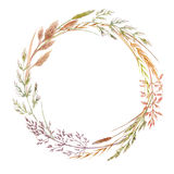 Wild field grass wreath. Beautiful wreath with hand drawn watercolor wild field grass Stock Photos
