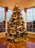 Beautiful xmas tree at dusk Royalty Free Stock Photo