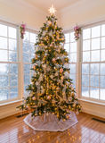 Beautiful xmas tree with snow outside Royalty Free Stock Images