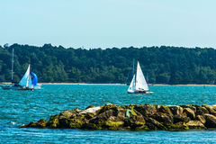 Beautiful yachts in the bay, sailing on the ocean, clear sky,  Royalty Free Stock Photos