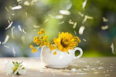 Beautiful yellow aster flowers and falling petals Royalty Free Stock Images
