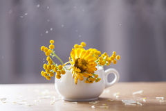Beautiful yellow aster flowers and falling petals Stock Image