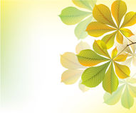 Beautiful yellow background with chestnut leaves Stock Photo