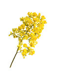 Beautiful yellow bouguet flowers Royalty Free Stock Photography