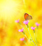 Beautiful yellow butterfly. Extreme closeup macro, nature life in spring stock photo