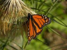 Free Beautiful Yellow Butterfly Stock Photography - 224300742