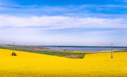 Yellow field near lake Royalty Free Stock Photo