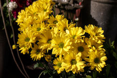 Beautiful yellow cut flowers margatires Royalty Free Stock Images