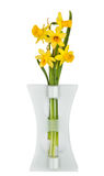 Beautiful Yellow Daffodils flowers stock photography