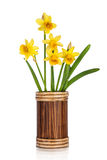 Beautiful Yellow Daffodils flowers in vase stock images