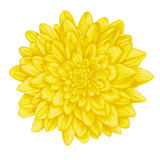 Beautiful yellow dahlia with the effect of a watercolor drawing isolated on white background. Royalty Free Stock Photos