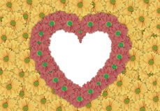 Beautiful  yellow daisy flower background and red daisy flower made heart shape Royalty Free Stock Photography