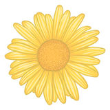 Beautiful yellow daisy flower with effect watercolor isolated on white background. Royalty Free Stock Image