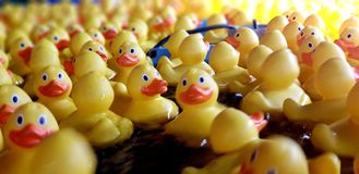 Rubber ducks swimming stock images