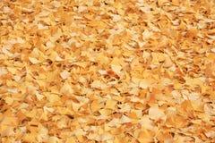 Beautiful yellow fallen autumn leaves background Royalty Free Stock Photos