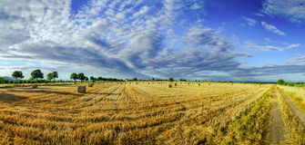 Beautiful yellow field with haystacks at sunset Stock Image