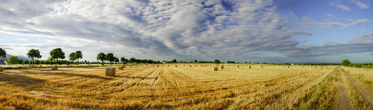 Beautiful yellow field with haystacks at sunset Stock Photography