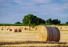 Beautiful yellow field with haystacks at sunset Stock Photo
