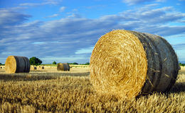 Beautiful yellow field with haystacks at sunset Royalty Free Stock Photos
