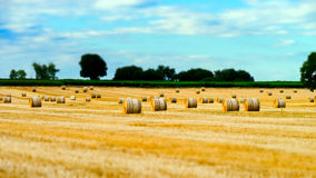 Beautiful yellow field with haystacks at sunset Royalty Free Stock Photography