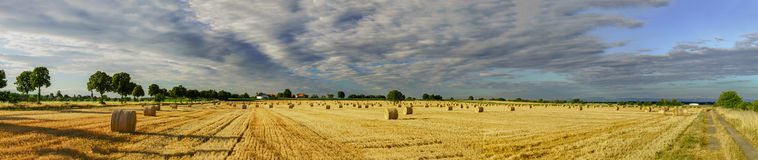 Beautiful yellow field with haystacks at sunset Stock Images